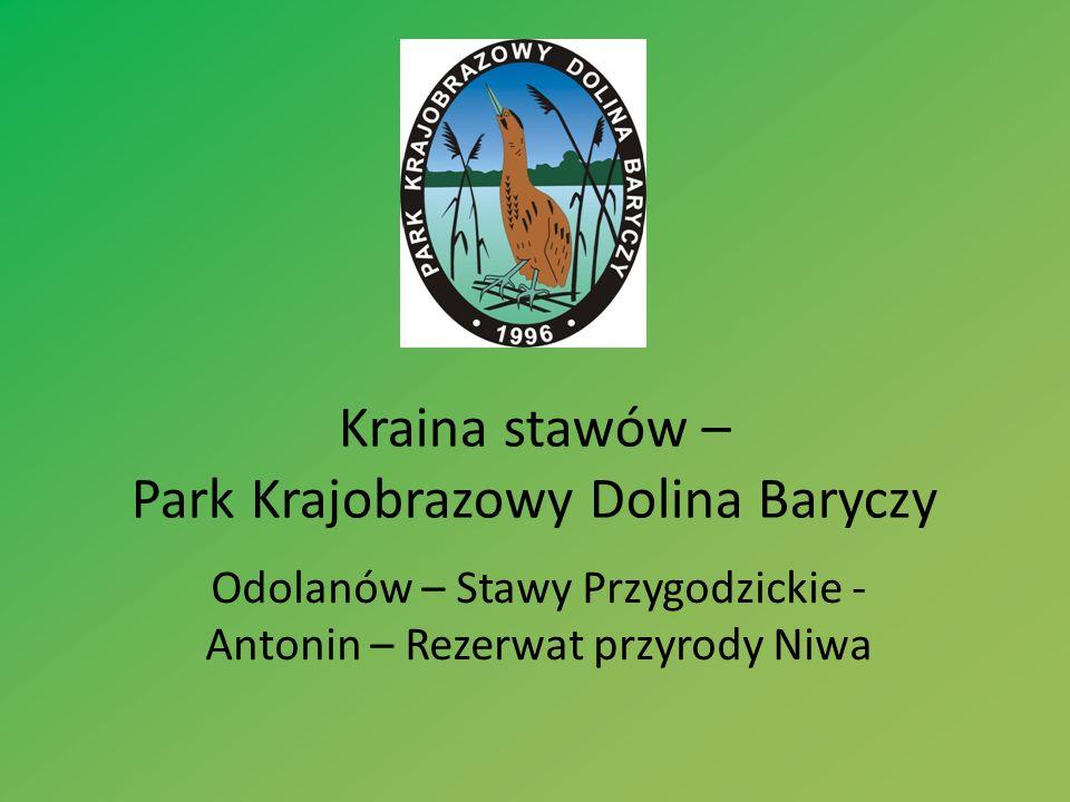 Kraina stawów – Park Krajobrazowy Dolina Baryczy Odolanów – Stawy Przygodzickie - Antonin – Rezerwat przyrody Niwa