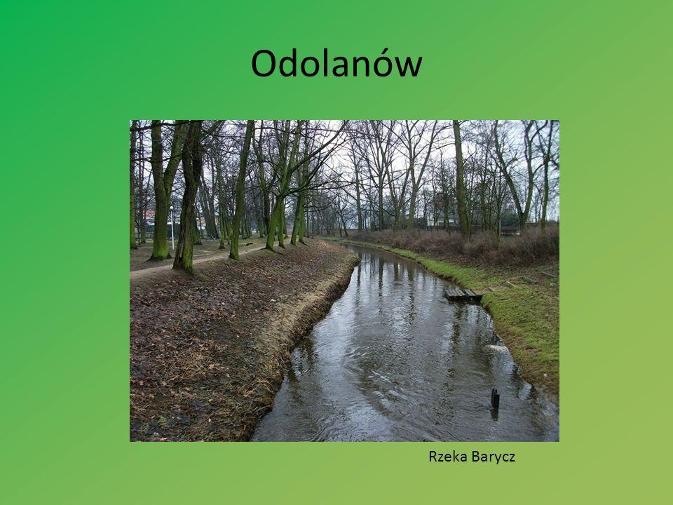 Odolanów Rzeka Barycz
