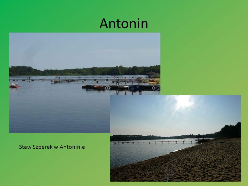 Antonin Staw Szperek w Antoninie