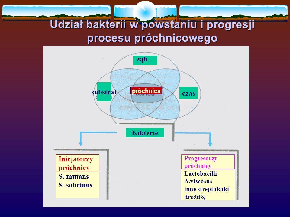 Udział bakterii w powstaniu i progresji procesu próchnicowego ząb substrat czas bakterie próchnica Inicjatorzy próchnicy S. mutans S. sobrinus Progres