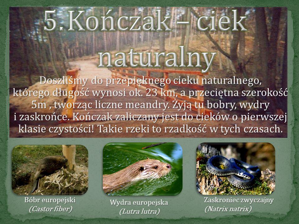 Najbogatszą w gatunki roślin warstwą w lesie jest runo. Na drzewach wokół rosną porosty, które są biowskaźnikami czystości powietrza. Borowik szlachet