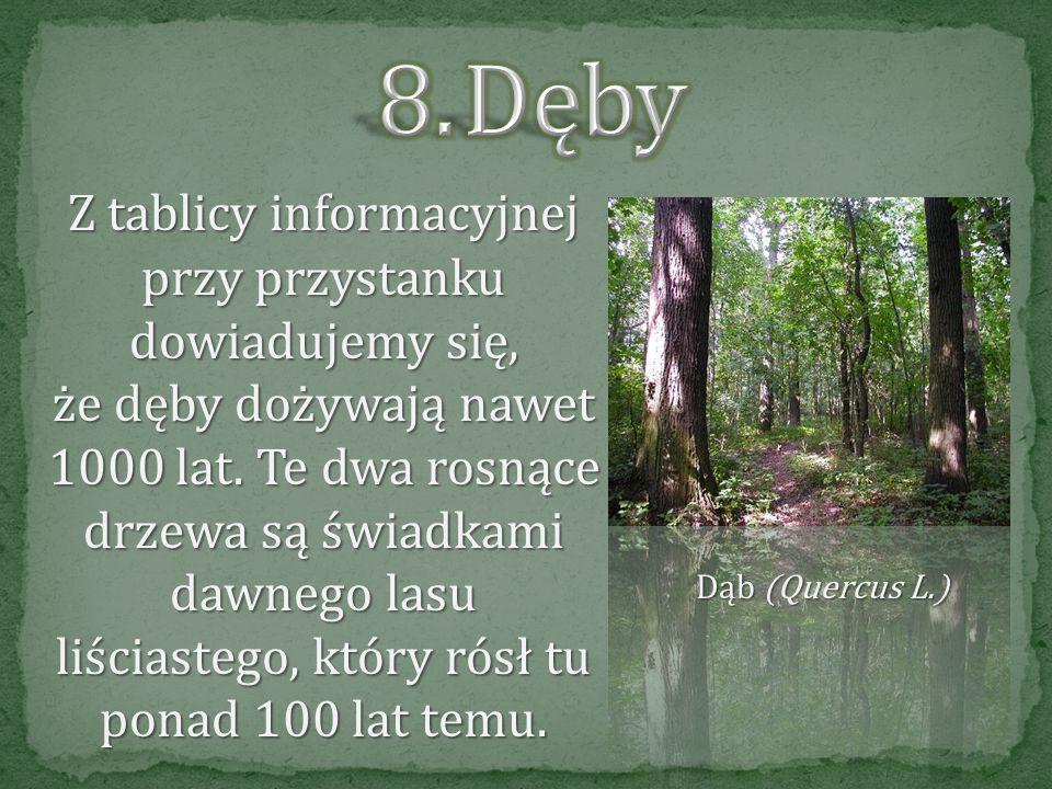 Wycięcie drzew (rębnia) jest jej efektem końcowym, a jednocześnie pierwszym etapem odnowienia lasu. Tutaj możemy zobaczyć fazy rozwoju: uprawę, młodni