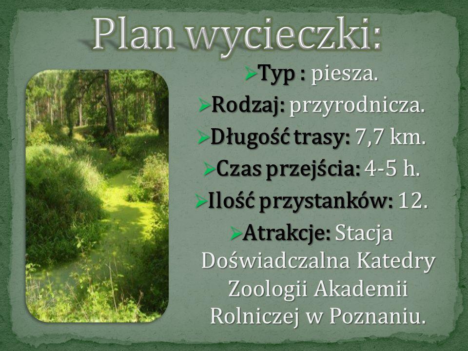 Puszcza Notecka leży na obszarze Natura 2000. Jest największym w Polsce kompleksem wydm śródlądowych i jednocześnie obszarem specjalnej ochrony ptaków