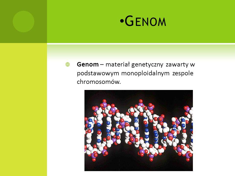C HROMOSOMY Chromosom submetacentryczny: 1 – chromatyda, 2 - centromer - miejsce złączenia dwóch chromatyd, 3 - ramię krótkie, 4 - ramię długie Chromo