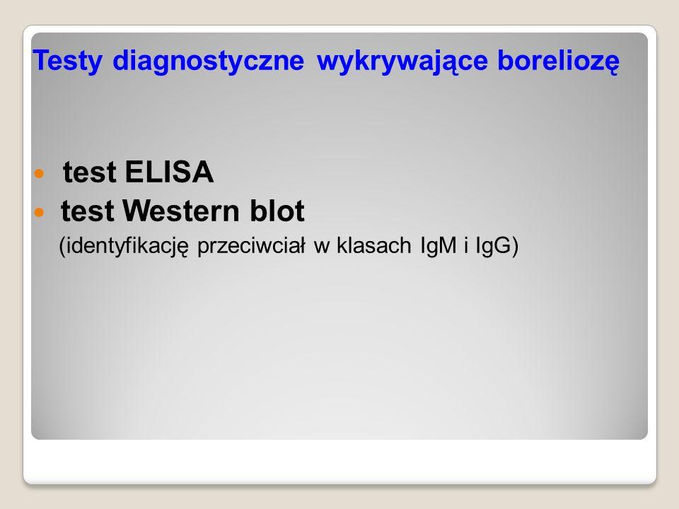 Testy diagnostyczne wykrywające boreliozę test ELISA test Western blot (identyfikację przeciwciał w klasach IgM i IgG)