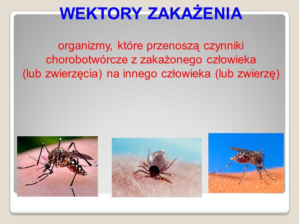 WEKTORY ZAKAŻENIA organizmy, które przenoszą czynniki chorobotwórcze z zakażonego człowieka (lub zwierzęcia) na innego człowieka (lub zwierzę)