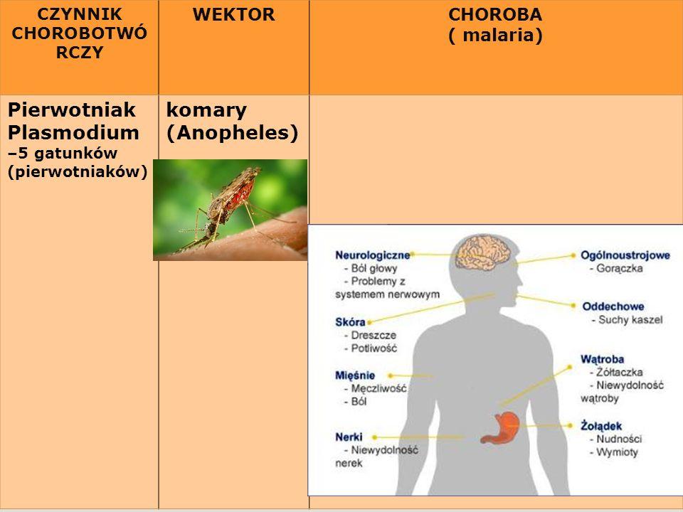 CZYNNIK CHOROBOTWÓ RCZY WEKTORCHOROBA ( malaria) Pierwotniak Plasmodium –5 gatunków (pierwotniaków) komary (Anopheles)