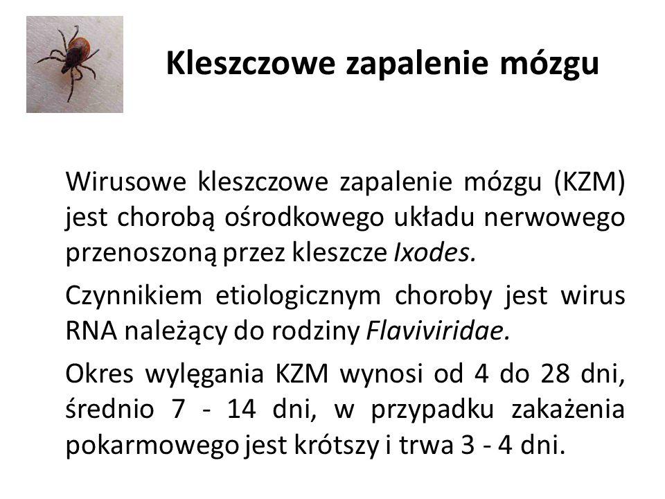 Kleszczowe zapalenie mózgu Wirusowe kleszczowe zapalenie mózgu (KZM) jest chorobą ośrodkowego układu nerwowego przenoszoną przez kleszcze Ixodes.
