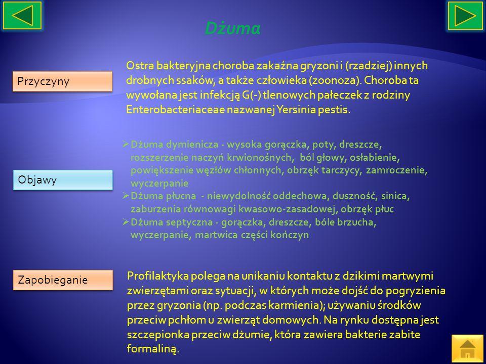 Przyczyny Objawy Zapobieganie Ostra bakteryjna choroba zakaźna gryzoni i (rzadziej) innych drobnych ssaków, a także człowieka (zoonoza). Choroba ta wy