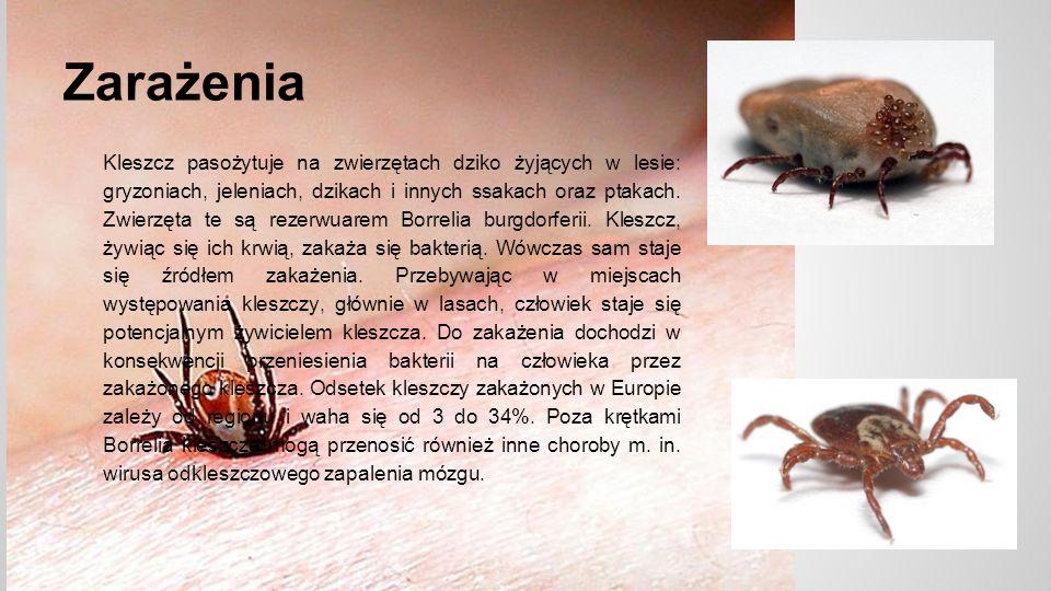 Zarażenia Kleszcz pasożytuje na zwierzętach dziko żyjących w lesie: gryzoniach, jeleniach, dzikach i innych ssakach oraz ptakach.