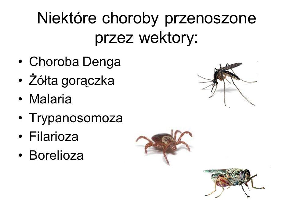 Objawy malarii: Dreszcze Wysoka gorączka (nawet ponad 40°C) Bóle głowy, nudności, wymioty.
