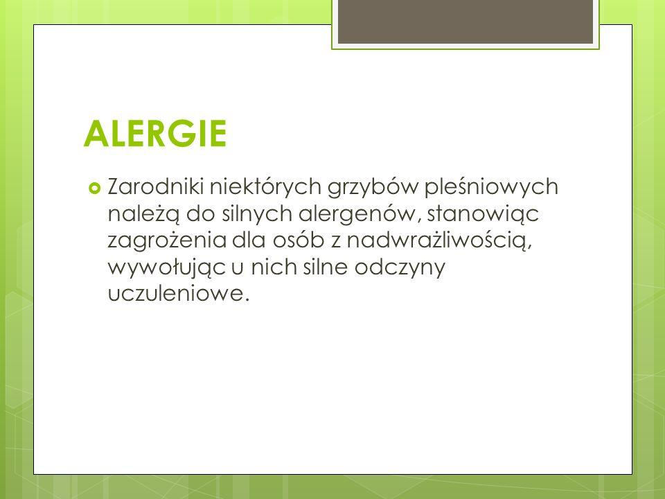 ALERGIE Zarodniki niektórych grzybów pleśniowych należą do silnych alergenów, stanowiąc zagrożenia dla osób z nadwrażliwością, wywołując u nich silne