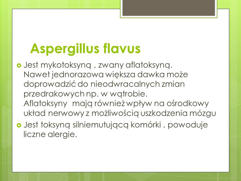 Aspergillus flavus Jest mykotoksyną, zwany aflatoksyną. Nawet jednorazowa większa dawka może doprowadzić do nieodwracalnych zmian przedrakowych np. w