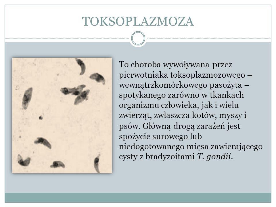 TOKSOPLAZMOZA To choroba wywoływana przez pierwotniaka toksoplazmozowego – wewnątrzkomórkowego pasożyta – spotykanego zarówno w tkankach organizmu czł