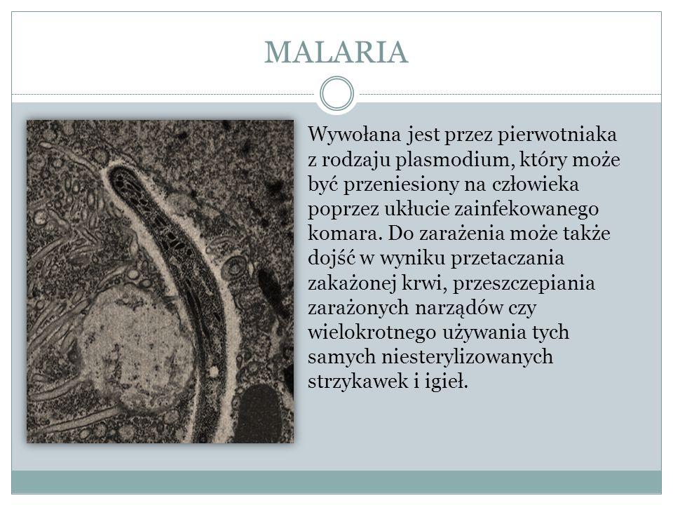 MALARIA Wywołana jest przez pierwotniaka z rodzaju plasmodium, który może być przeniesiony na człowieka poprzez ukłucie zainfekowanego komara. Do zara