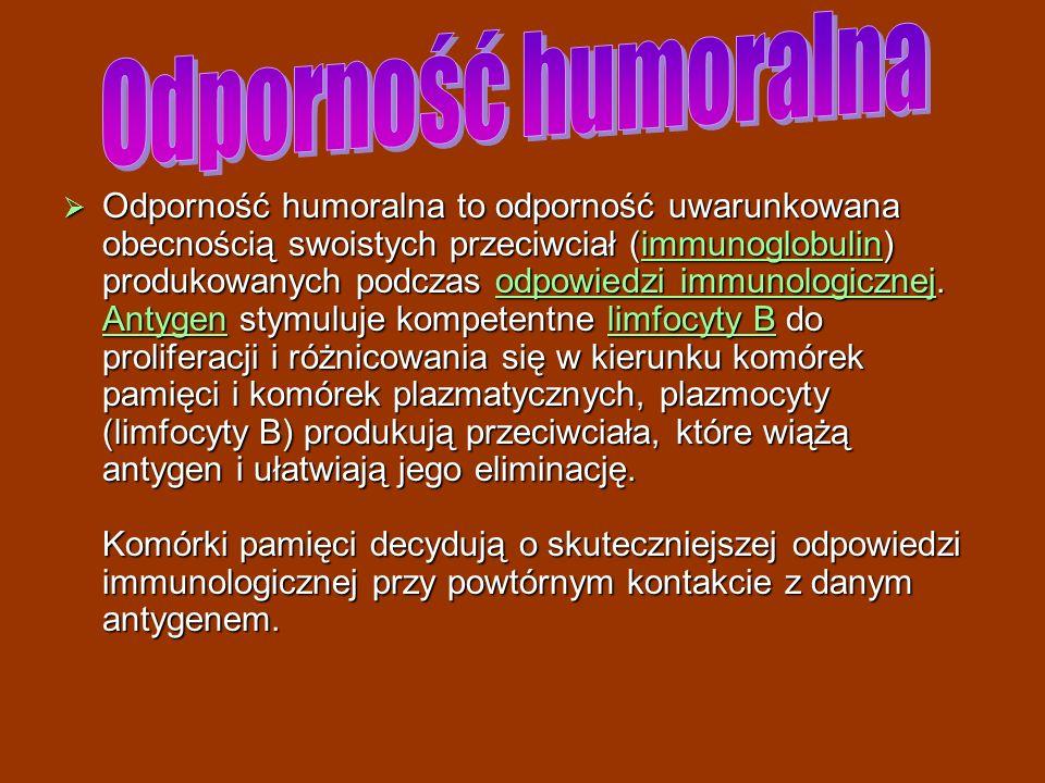 Odporność humoralna to odporność uwarunkowana obecnością swoistych przeciwciał (immunoglobulin) produkowanych podczas odpowiedzi immunologicznej. Anty