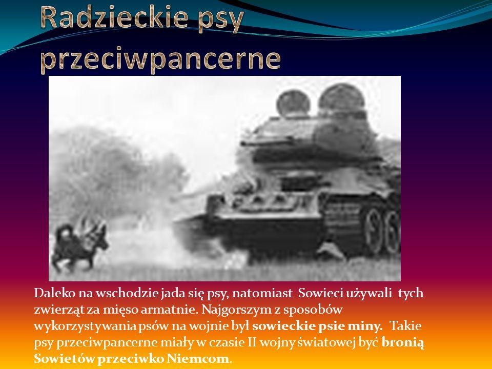 Żołnierze na wojnę zabierali ze sobą zwierzęta dla zabawy, pojawiały się też one w szpitalach wojskowych.