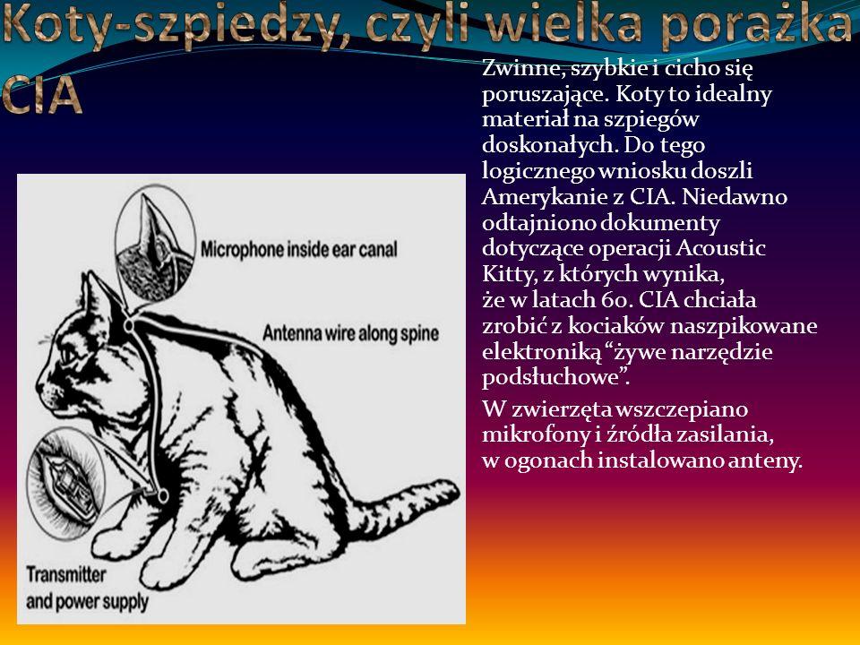 Nie tylko Sowieci próbowali robić ze zwierząt zamachowców samobójców.