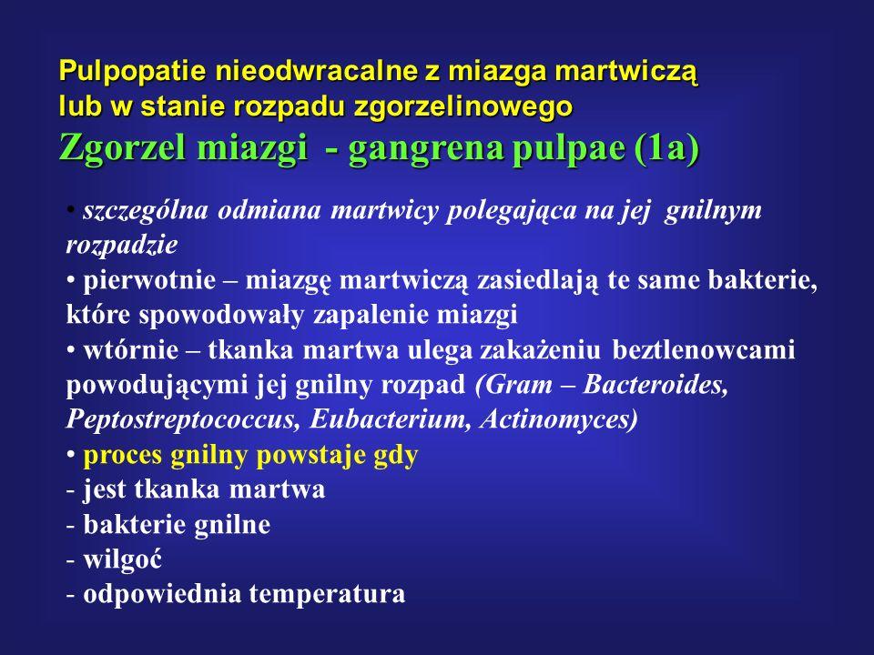 Pulpopatie nieodwracalne z miazga martwiczą lub w stanie rozpadu zgorzelinowego Zgorzel miazgi - gangrena pulpae (1a) szczególna odmiana martwicy pole