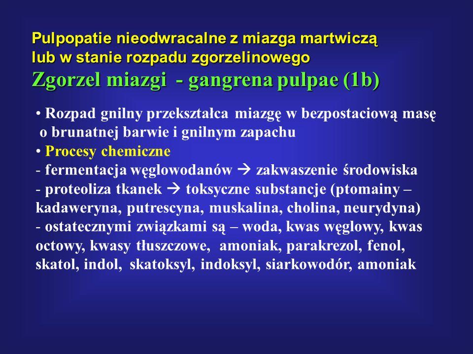 Pulpopatie nieodwracalne z miazga martwiczą lub w stanie rozpadu zgorzelinowego Zgorzel miazgi - gangrena pulpae (1b) Rozpad gnilny przekształca miazg