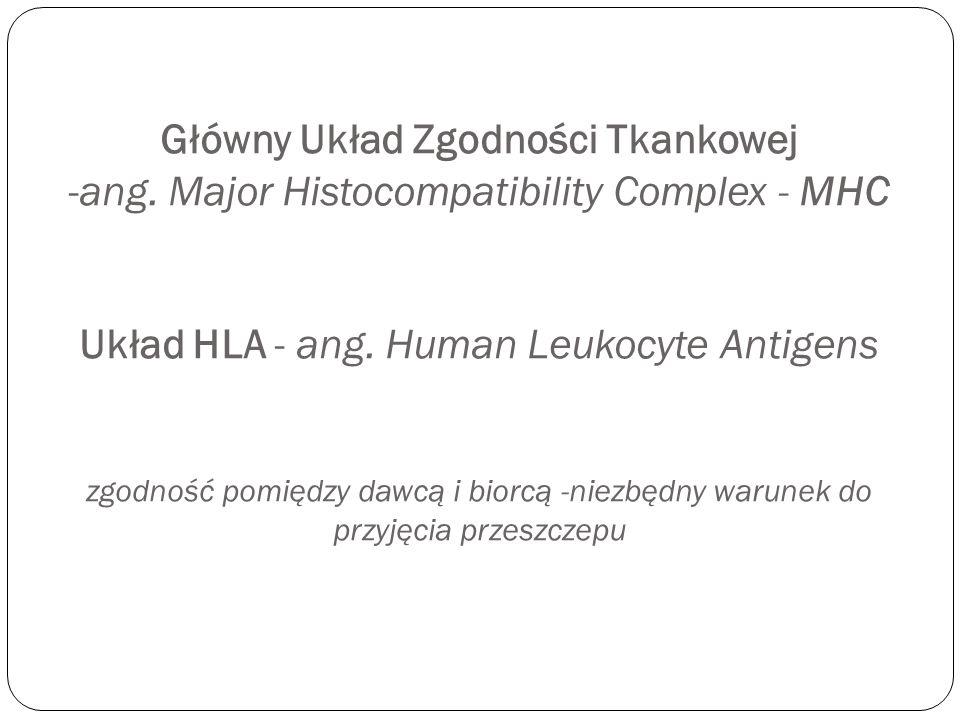 Główny Układ Zgodności Tkankowej -ang. Major Histocompatibility Complex - MHC Układ HLA - ang. Human Leukocyte Antigens zgodność pomiędzy dawcą i bior