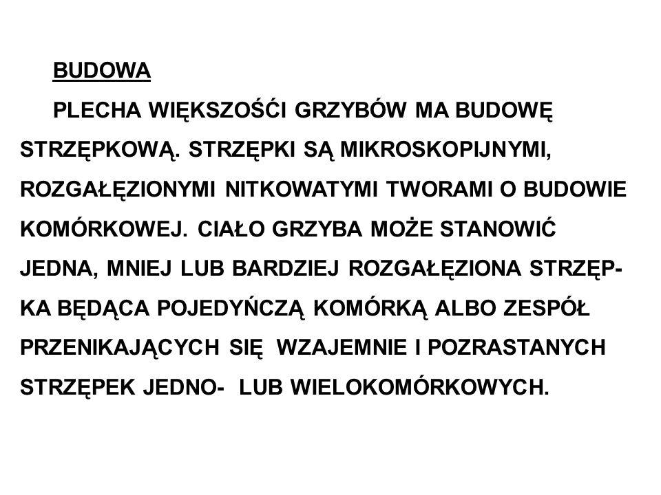 Workowce (Ascomycetes) Monilinia fructigena (Aderh.