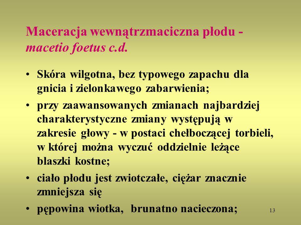 13 Maceracja wewnątrzmaciczna płodu - macetio foetus c.d. Skóra wilgotna, bez typowego zapachu dla gnicia i zielonkawego zabarwienia; przy zaawansowan