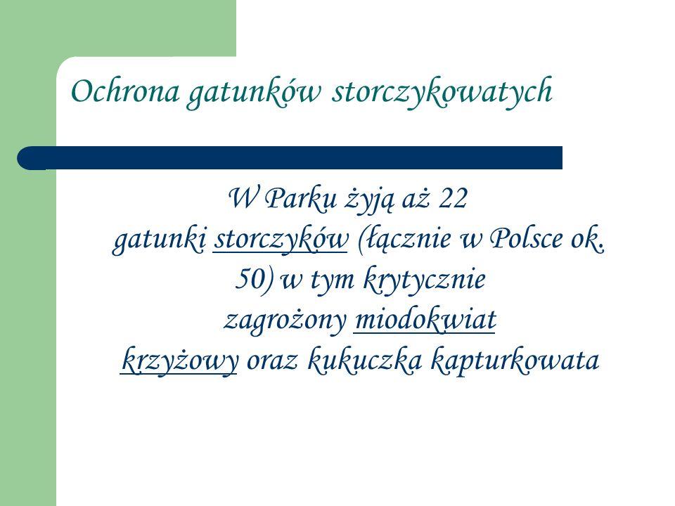 Ochrona gatunków storczykowatych W Parku żyją aż 22 gatunki storczyków (łącznie w Polsce ok. 50) w tym krytycznie zagrożony miodokwiat krzyżowy oraz k
