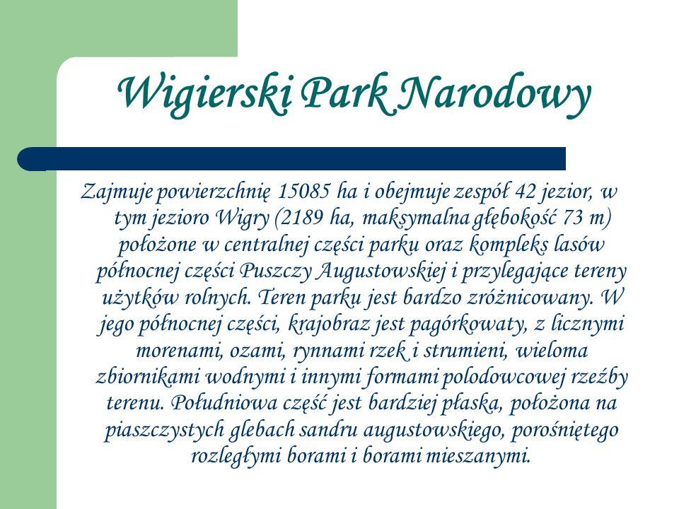 Wigierski Park Narodowy Zajmuje powierzchnię 15085 ha i obejmuje zespół 42 jezior, w tym jezioro Wigry (2189 ha, maksymalna głębokość 73 m) położone w