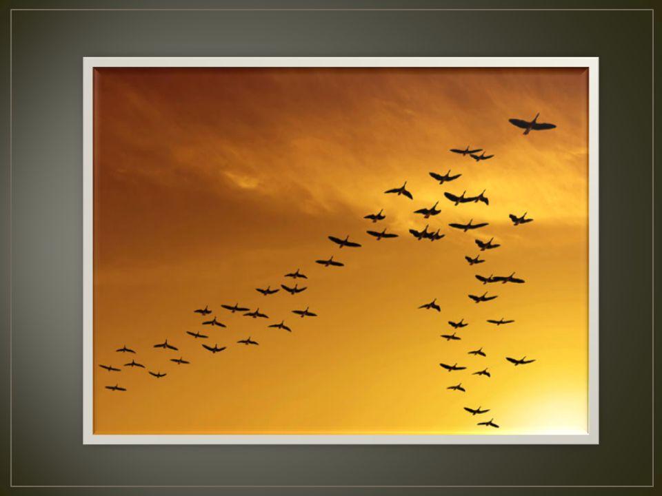 Szlaki kaczek, gęsi i ptaków siewkowatych