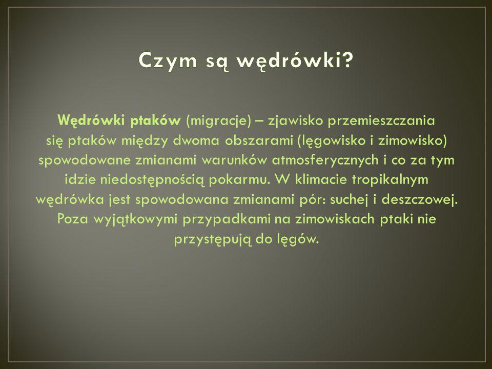Bibliografia: www.wikipedia.pl, www.otopjunior.org.pl, www.odkrywcy.pl