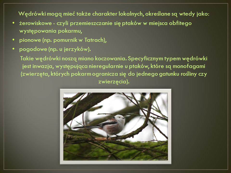Wędrówki mogą mieć także charakter lokalnych, określane są wtedy jako: żerowiskowe - czyli przemieszczanie się ptaków w miejsca obfitego występowania