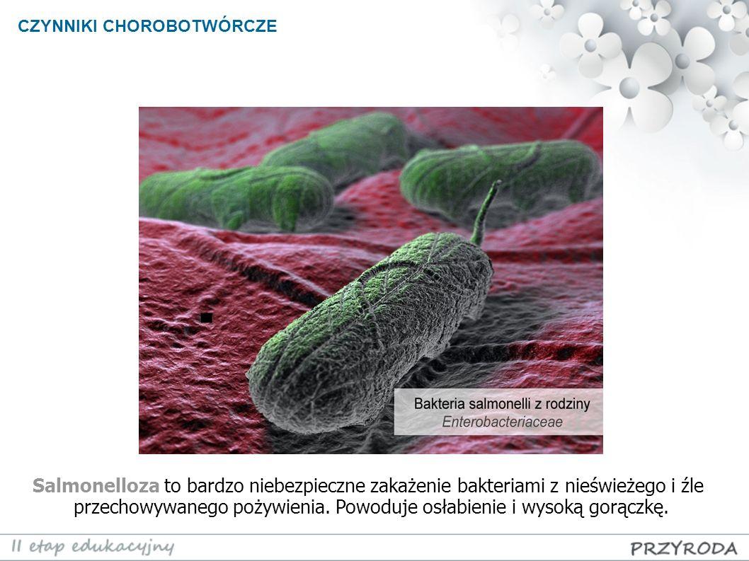 CZYNNIKI CHOROBOTWÓRCZE Salmonelloza to bardzo niebezpieczne zakażenie bakteriami z nieświeżego i źle przechowywanego pożywienia. Powoduje osłabienie