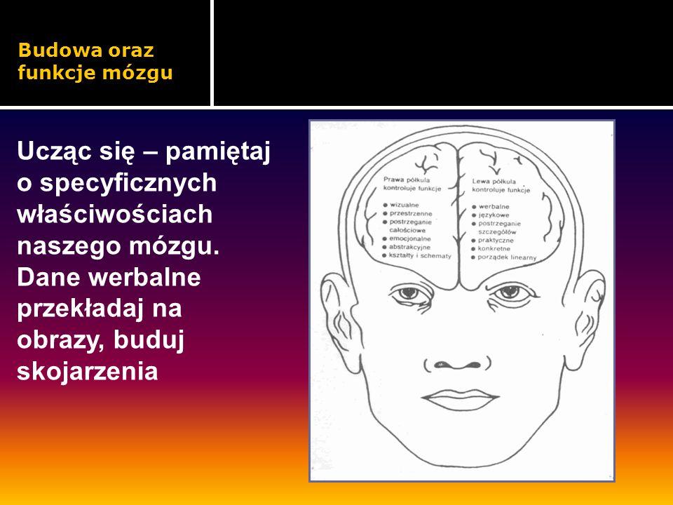 Budowa oraz funkcje mózgu Ucząc się – pamiętaj o specyficznych właściwościach naszego mózgu. Dane werbalne przekładaj na obrazy, buduj skojarzenia