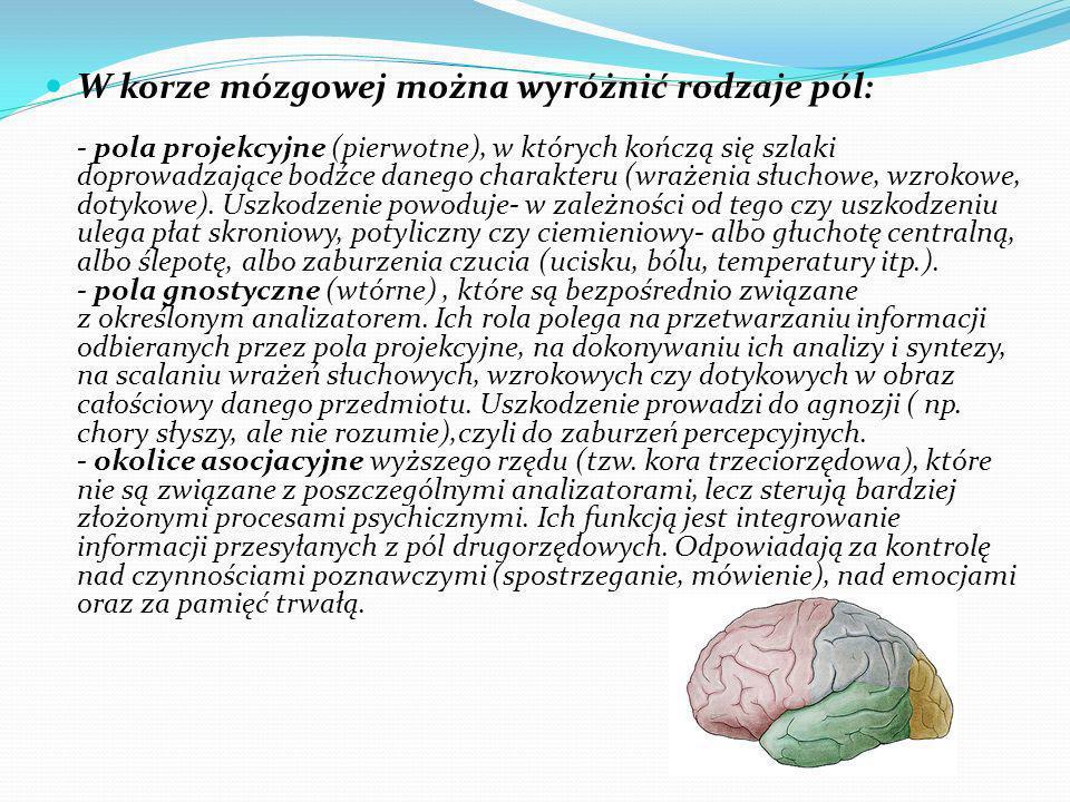 W korze mózgowej można wyróżnić rodzaje pól: - pola projekcyjne (pierwotne), w których kończą się szlaki doprowadzające bodźce danego charakteru (wrażenia słuchowe, wzrokowe, dotykowe).