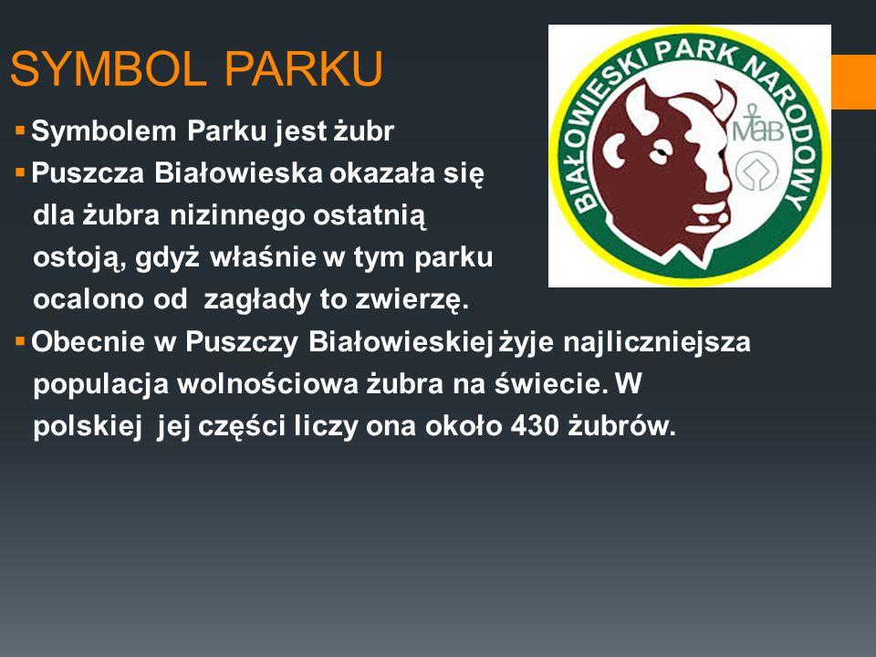 SYMBOL PARKU Symbolem Parku jest żubr Puszcza Białowieska okazała się dla żubra nizinnego ostatnią ostoją, gdyż właśnie w tym parku ocalono od zagłady