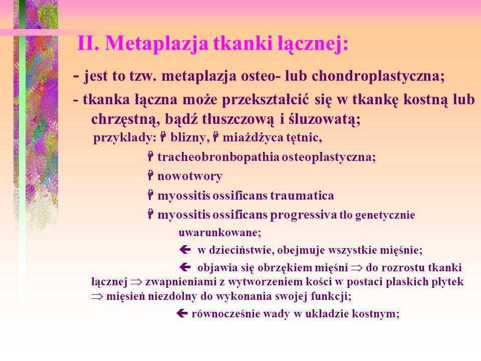 II. Metaplazja tkanki łącznej: - jest to tzw. metaplazja osteo- lub chondroplastyczna; - tkanka łączna może przekształcić się w tkankę kostną lub chrz