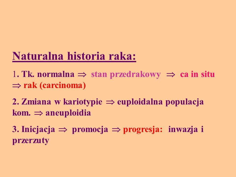 Naturalna historia raka: 1. Tk. normalna stan przedrakowy ca in situ rak (carcinoma) 2. Zmiana w kariotypie euploidalna populacja kom. aneuploidia 3.