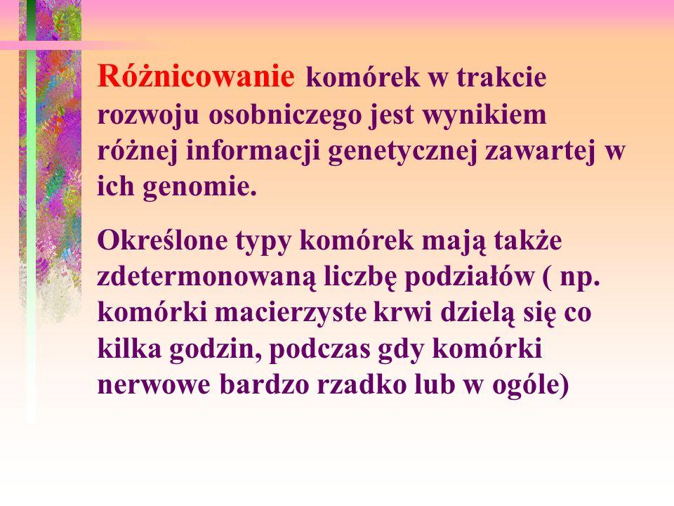 Różnicowanie komórek w trakcie rozwoju osobniczego jest wynikiem różnej informacji genetycznej zawartej w ich genomie. Określone typy komórek mają tak