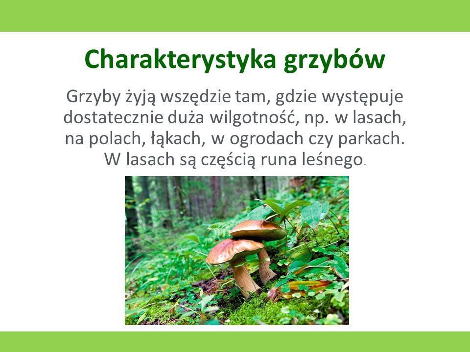 Charakterystyka grzybów Grzyby żyją wszędzie tam, gdzie występuje dostatecznie duża wilgotność, np. w lasach, na polach, łąkach, w ogrodach czy parkac