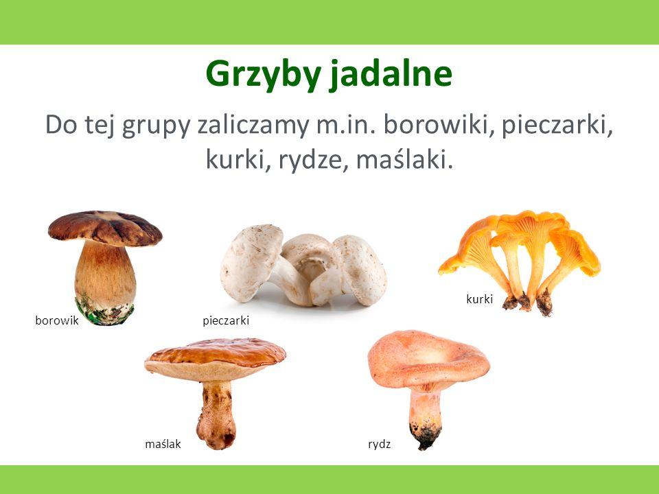 Grzyby jadalne Do tej grupy zaliczamy m.in.borowiki, pieczarki, kurki, rydze, maślaki.