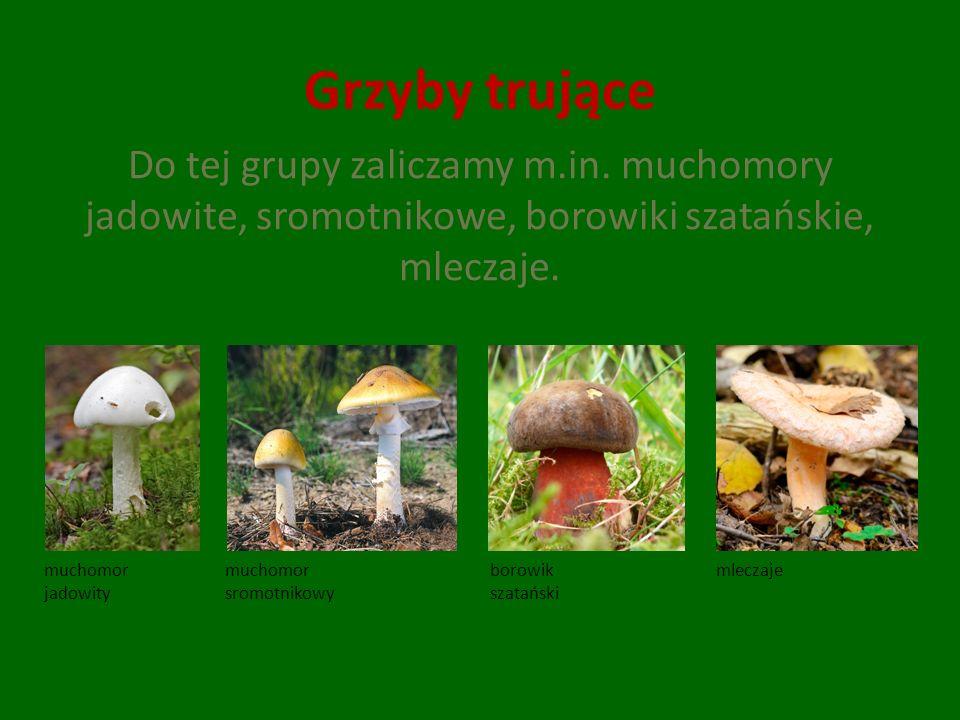 Grzyby trujące Do tej grupy zaliczamy m.in. muchomory jadowite, sromotnikowe, borowiki szatańskie, mleczaje. muchomor jadowity muchomor sromotnikowy b