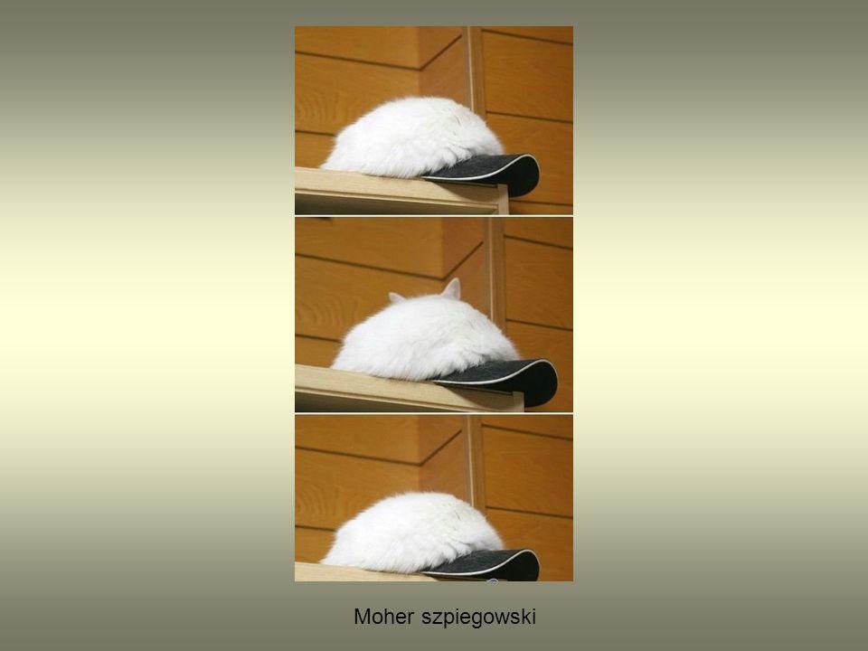Moher szpiegowski