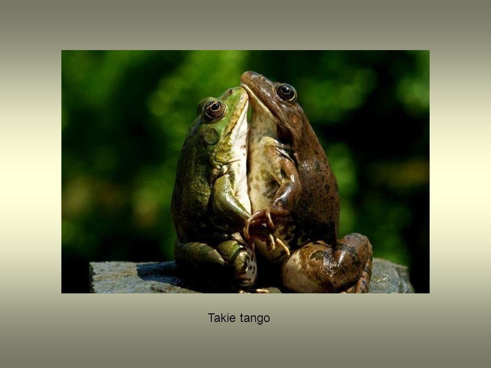 Takie tango
