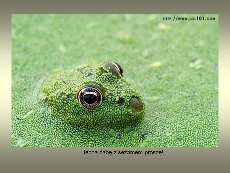 Jedną żabę z sezamem proszę!