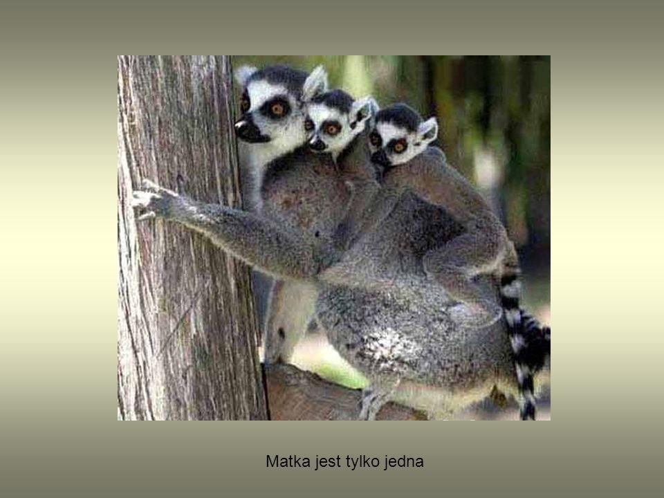 Matka jest tylko jedna