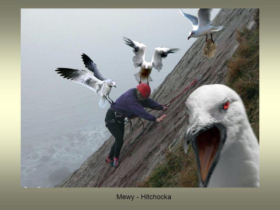 Mewy - Hitchocka