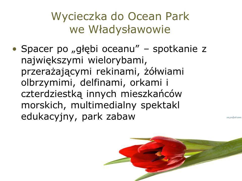 Wycieczka do Ocean Park we Władysławowie Spacer po głębi oceanu – spotkanie z największymi wielorybami, przerażającymi rekinami, żółwiami olbrzymimi,