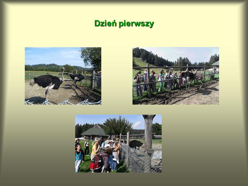 Jest to jedyny obszar w Karpatach Polskich ze stanowiskiem paproci rozrzutki brunatnej.