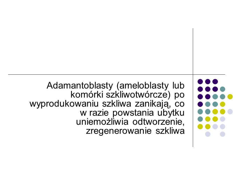 Adamantoblasty (ameloblasty lub komórki szkliwotwórcze) po wyprodukowaniu szkliwa zanikają, co w razie powstania ubytku uniemożliwia odtworzenie, zreg